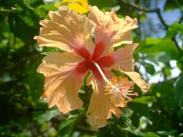 The hibiscus of courage by GreenNexus51