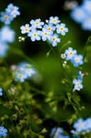 flower-0035 by flowery-zim