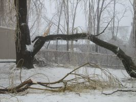 Fallen Branch 02 by LithiumStock