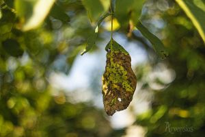 Beginning of fall by Arvensias