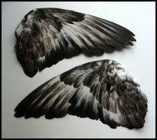 Feral Pigeon Wings by CabinetCuriosities