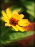 Envious of Yellow by various126