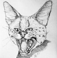 Quick Serval Study by Tebyx