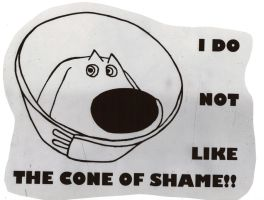 Dug Cone of Shame by SarahGoodwill