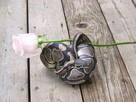 snakes and Roses 3 by snakesskin