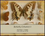 Butterfly Stock Pack 2 by Toefje-Kunst