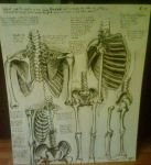 Drawing of one of DaVinci's anatomical designs by Zani-Loki
