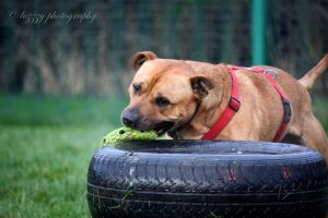 I do love tyres - Skipper RSPCA Leeds by lozzzy
