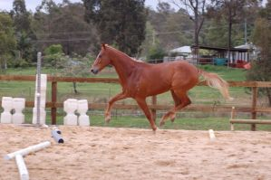 TB weird tip toe position by Chunga-Stock