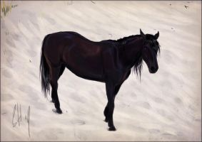 black stallion speed by blackseagull