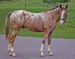 Arian Conformation Right Side by Crazy-Sparkles-Stock