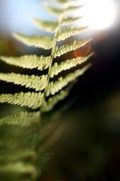 Twisted Plant by StolenSecrets