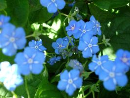 Blue Flowers by Petra87
