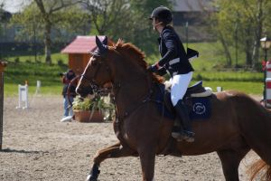 Chestnut Horse - Show jumping stock 5.3 by MagicLecktra