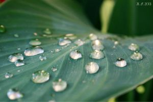 Raindrops II by K-S-Photography