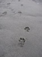 Final Foot Prints by Bambiified