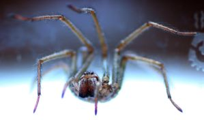 Up lighted garden spider by Wadyface
