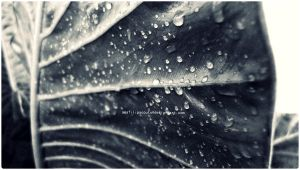 Little drops on giant leaf by anafilipacouto