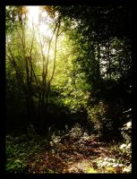 Light through the branches by Batteryhq