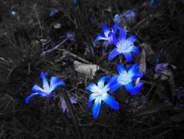 Light Blue Flowers by WolfieMaster