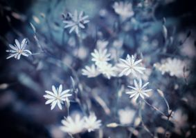 small white flowers by jagerion
