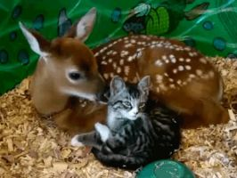 Cat And Young Deer by Me-MAI