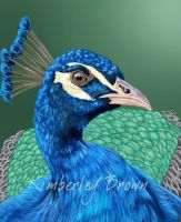 Peacock by MzJekyl