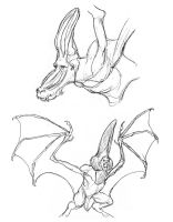 Chiropterape Roughs by thomastapir