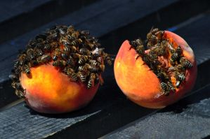 Peaches and Bees by TheMetronomad