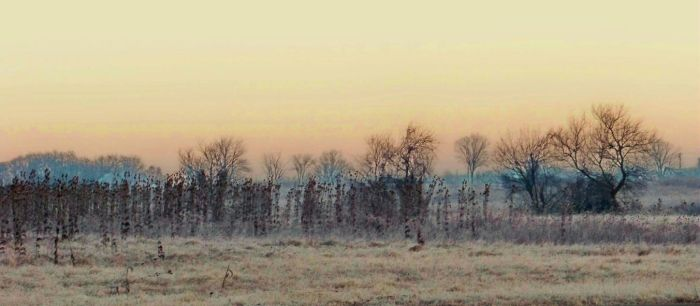 Mid Winter Dreamscape III by MadGardens