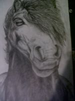 Finished Horse Drawing by broganisamoomin