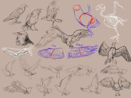 Bird Studies by Aviaku