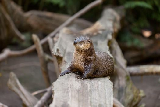 Otter, in repose by Dustspots
