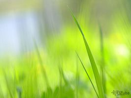 grass by efeline