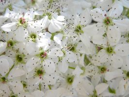 Blossoms by D905