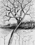 Tree at the Shore by philippeL