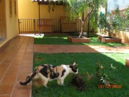 Lindinha in the front garden by Volfegan