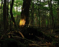Eyes of Aokigahara by sisterhellfyre