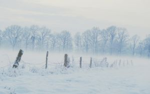 Foggy field by Schneeengel