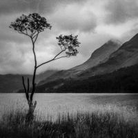 lone tree textured by lesterlester