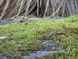 Moss Field by storms-and-lightning