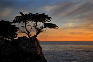 Lone Cypress Sunset II by Allen59