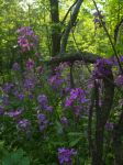 Wildflowers and Branches by AllStock