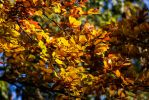 Golden autumn by Budeltier