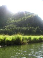 tropical river view 14 by CotyStock