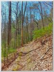 Easy Up Hill on Ace Gap Trail by slowdog294