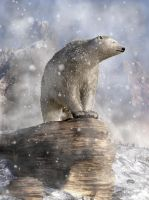 Polar Bear in a Snowstorm by deskridge