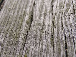 wood 02 by Caltha-stock