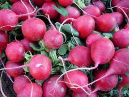 Radishes by FantasyStock