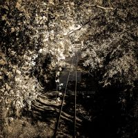Tracks XIX by mikeheer
